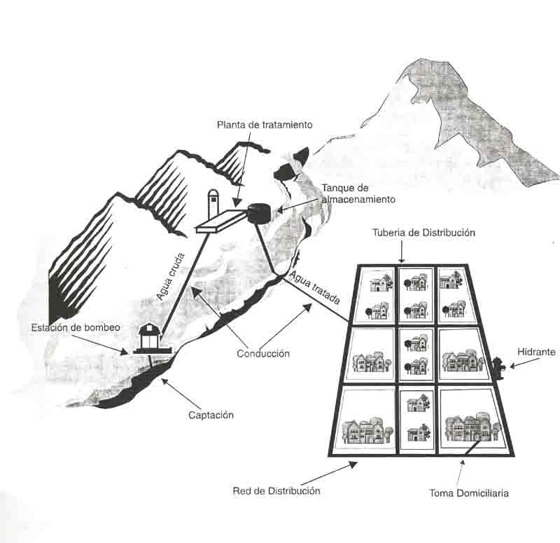 estructura de terpenos y esteroides
