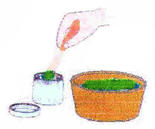 Baños Plantas Medicinales: los Aceites Esenciales Extraídos de Plantas Medicinales Y Aromáticas